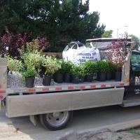 Picking up Plants